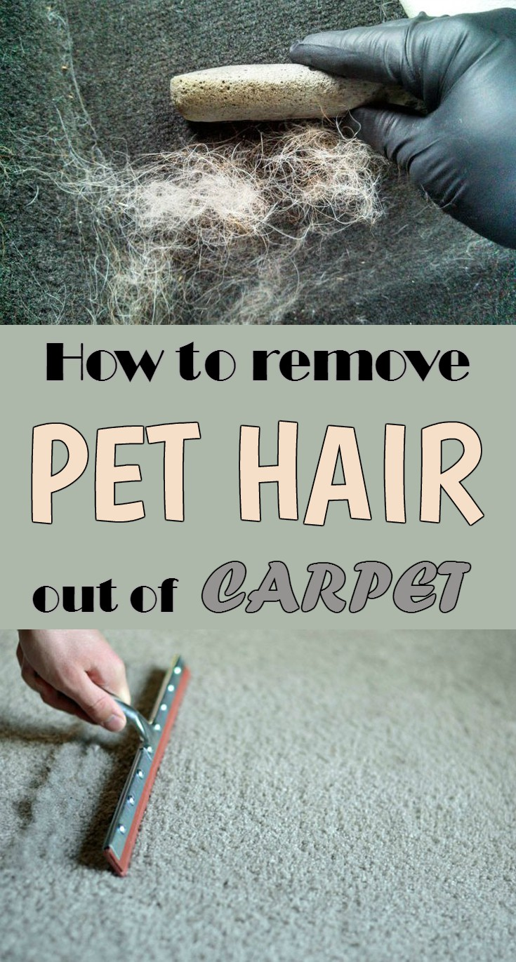 How To Remove Pet Hair Out Of Carpet Cleaninginstructor Com