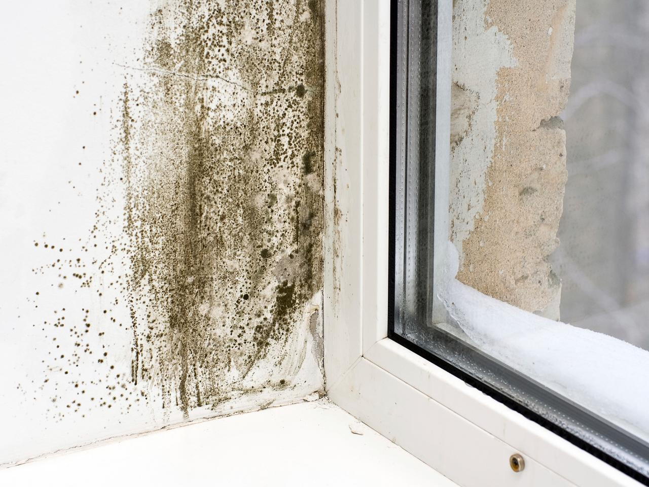 How to get rid of mold without using toxic cleaning products