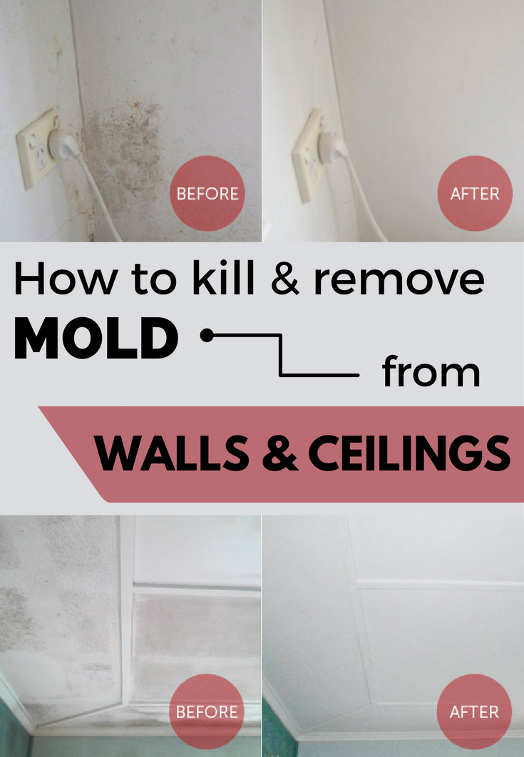 How To Kill Remove Mold From Walls And Ceilings