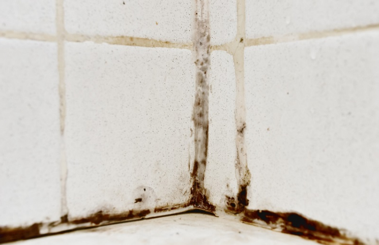 Ingenious tricks to get rid of bathroom mold forever - Getting rid of black mold in bathroom ...
