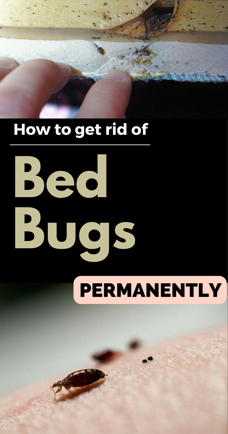 Cheapest Way To Get Rid Of Bed Bugs 28 Images How To