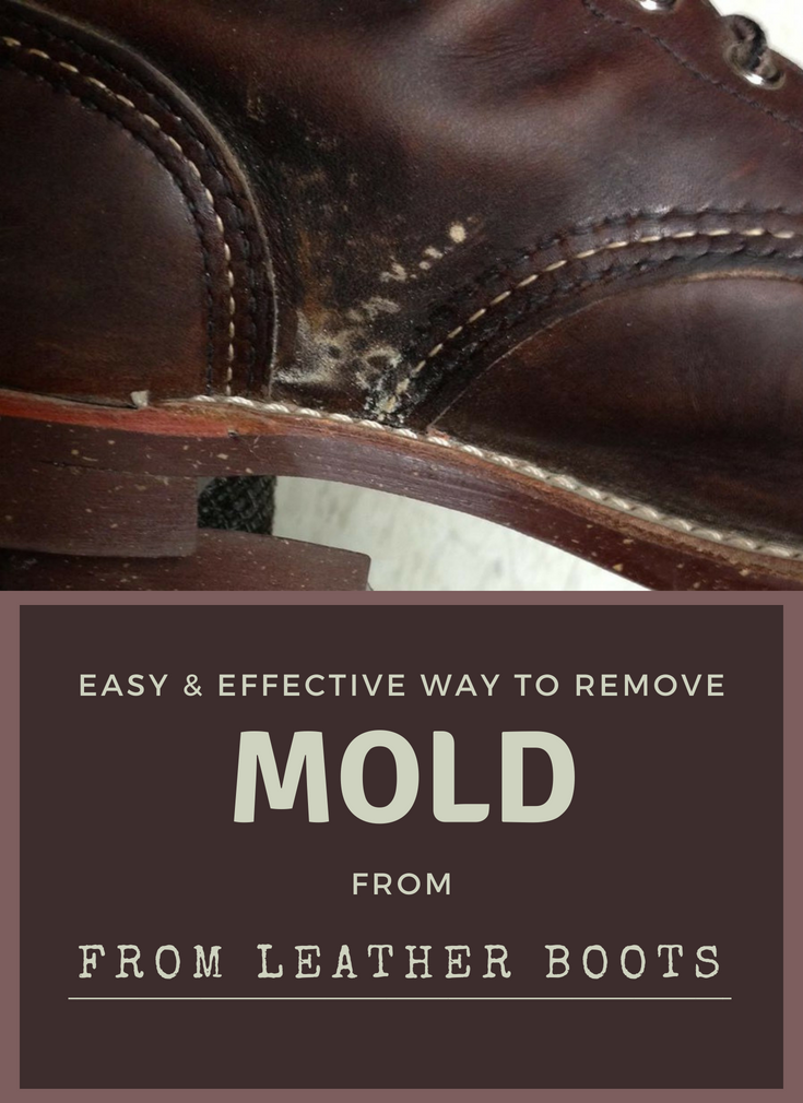 how to get rid of mold on leather