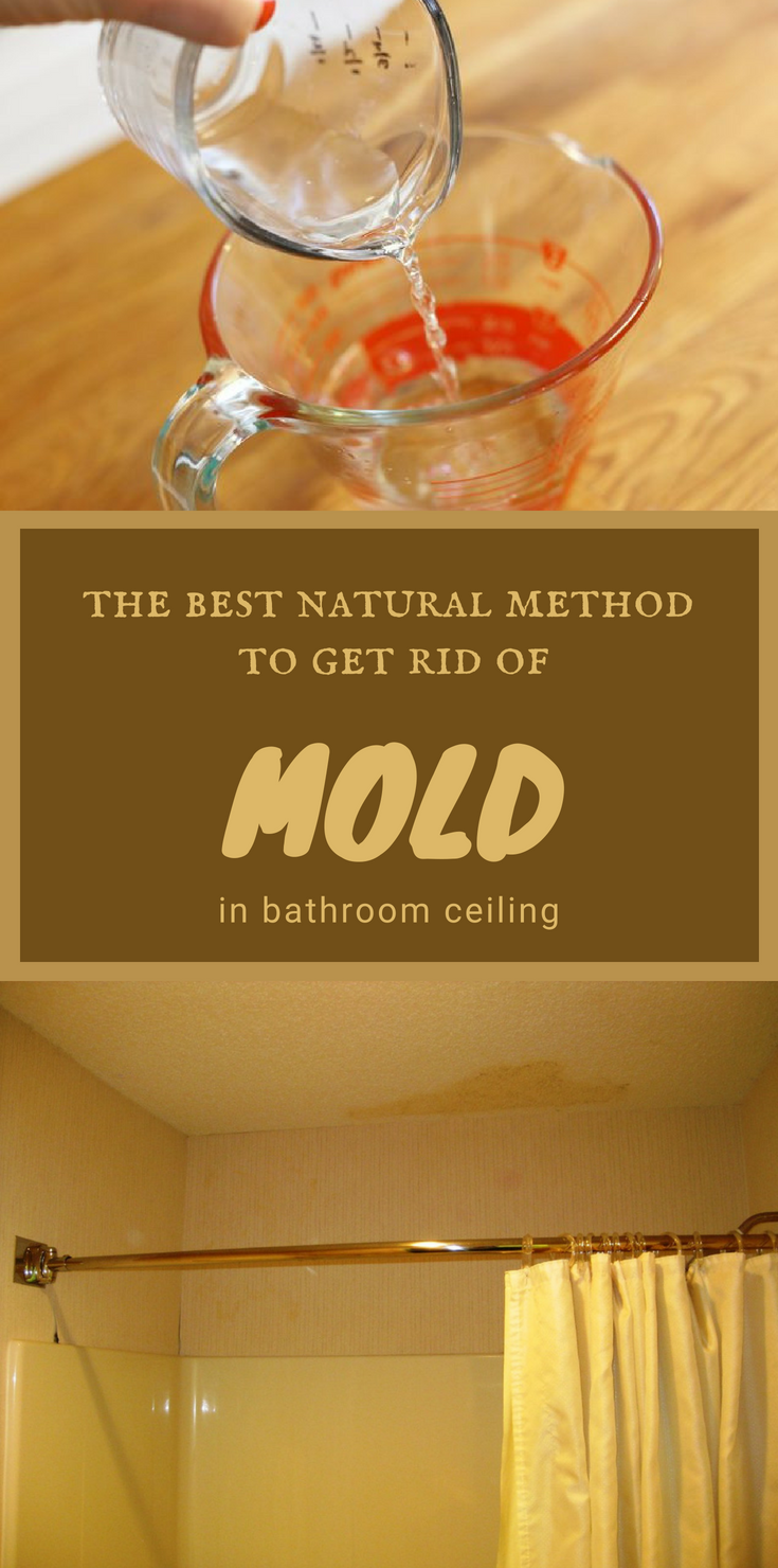 The Best Natural Method To Get Rid Of Mold In Bathroom