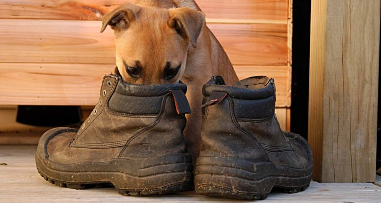 """Magic Trick To Get Rid Of That """"Magical"""" Odor Out Of Your Shoes"""