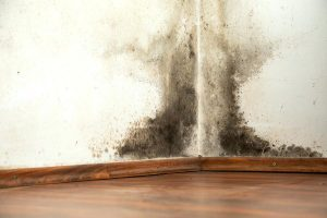 Salt – Best Non-Toxic Way To Remove Mold On Walls