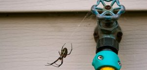 Homemade Hacks To Get Rid Of Spiders Once And For All