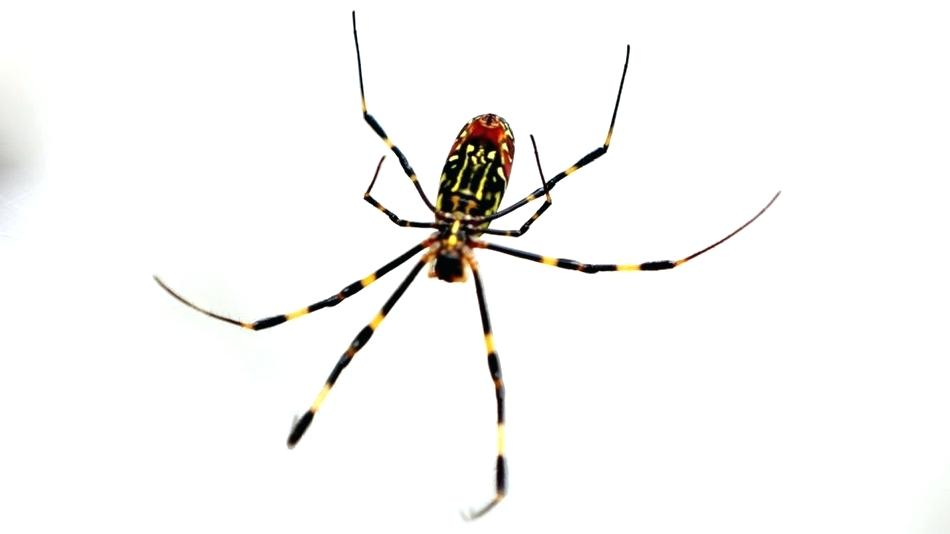 How To Keep Spiders Away With Natural Remedies Only
