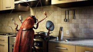 Lethal Balls To Get Rid Of Those Disgusting Kitchen Roaches And Prevent An Invasion