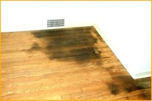 Homemade Enzyme Pee Cleaner For Hardwood Flooring And Carpets
