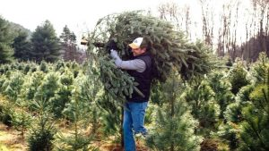 De-Bugging: What To Do If You Have Bugs In Your Christmas Tree