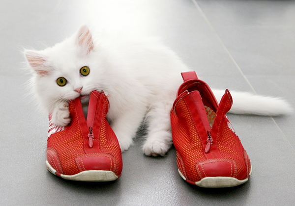 cat urine out of leather shoes