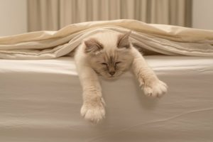 Easy Way To Remove Cat Vomit Stains From Silk Bed Sheets